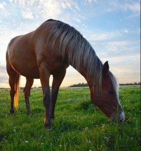 What Do Unicorns Eat - Horse Food