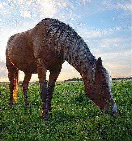 Are Unicorns Horses? - Horses Eating Grass