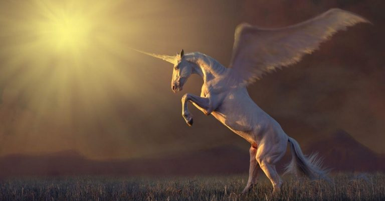 37 Unicorn Facts to Astonish You
