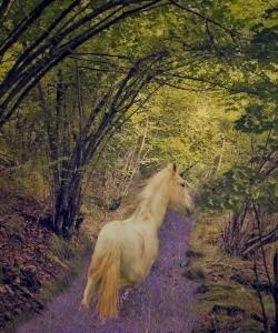 How Do Unicorns Live - Unicorn in Forest