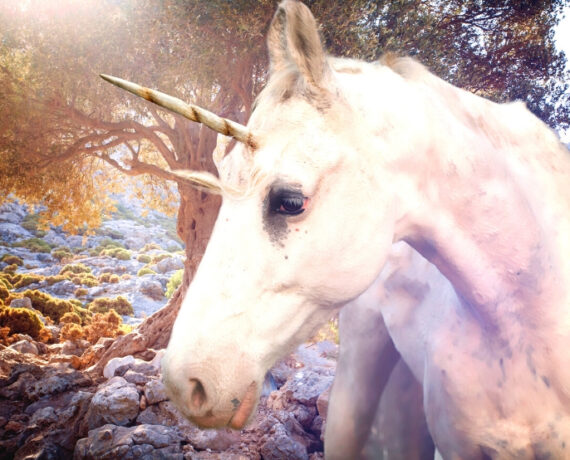 Which Type of Unicorn Are You? – An Exciting Quiz