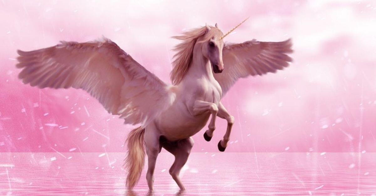 Which Type of Unicorn Are You - Winged Unicorn on Pink