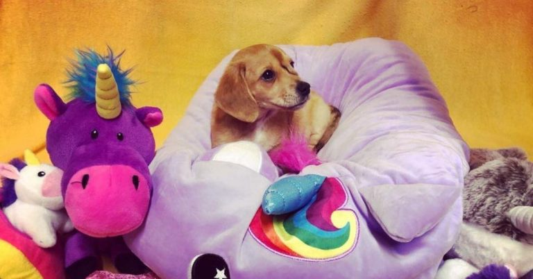 Narwhal the Unicorn Puppy