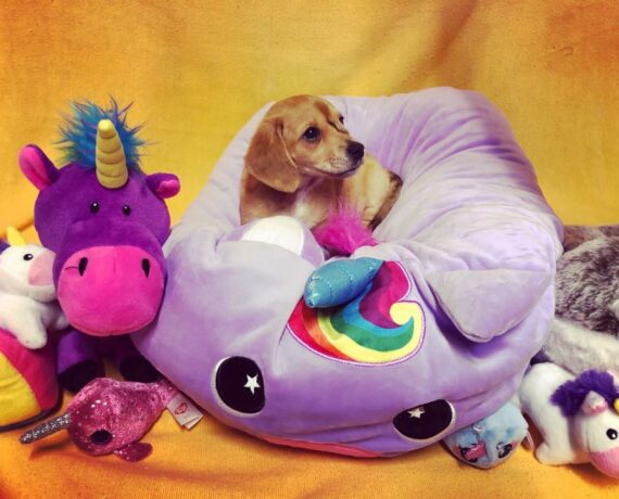 Narwhal the Unicorn Puppy Adoption Plans Canceled – Stays With the Animal Shelter Founder