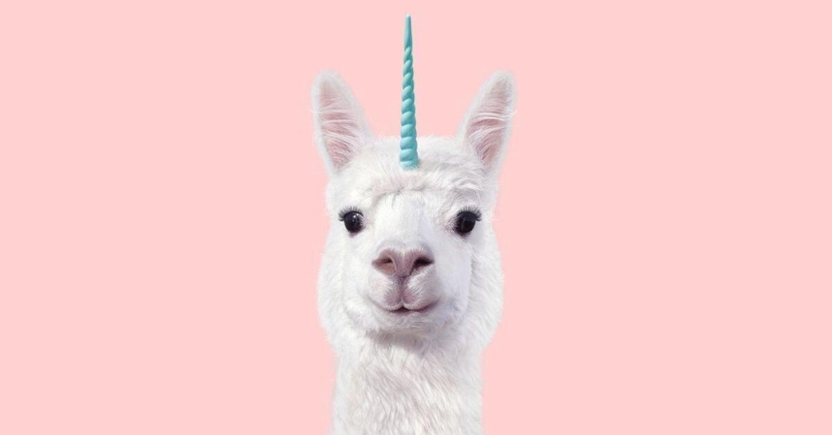 What Is a Llamacorn - Llamacorn Head on Pink Background