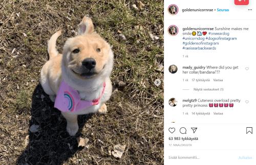 Unicorn Dog Rae on Instagram