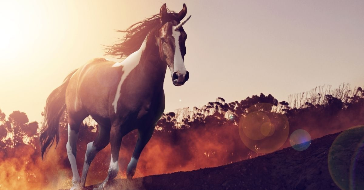 Are Unicorns Horses with a Horn_ - A Galloping Unicorn